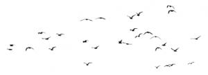 Heartsease logo meeuwen